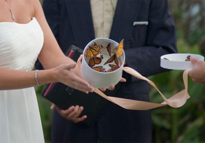 borboleta-em-cerimonias-de-casamento_01