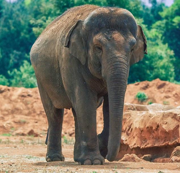 elefante-joga-pedra-na-cabeca-de-crianca_01