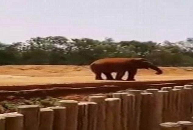 elefante-joga-pedra-na-cabeca-de-crianca_03