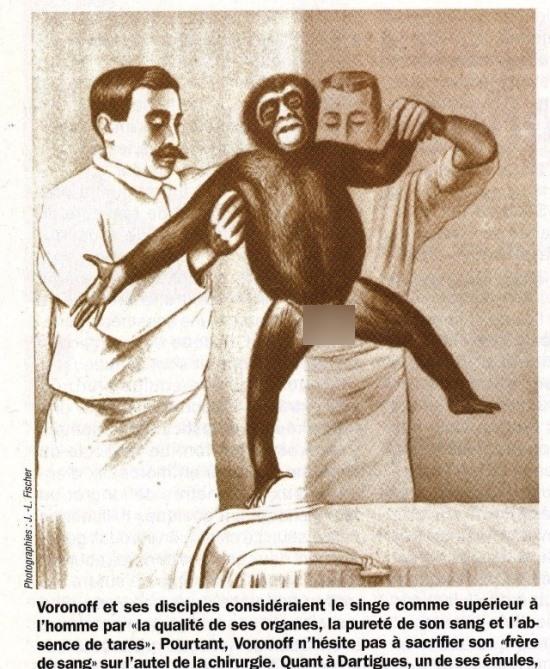medico-usou-testiculos-de-macaco-contra-o-envelhecimento_01