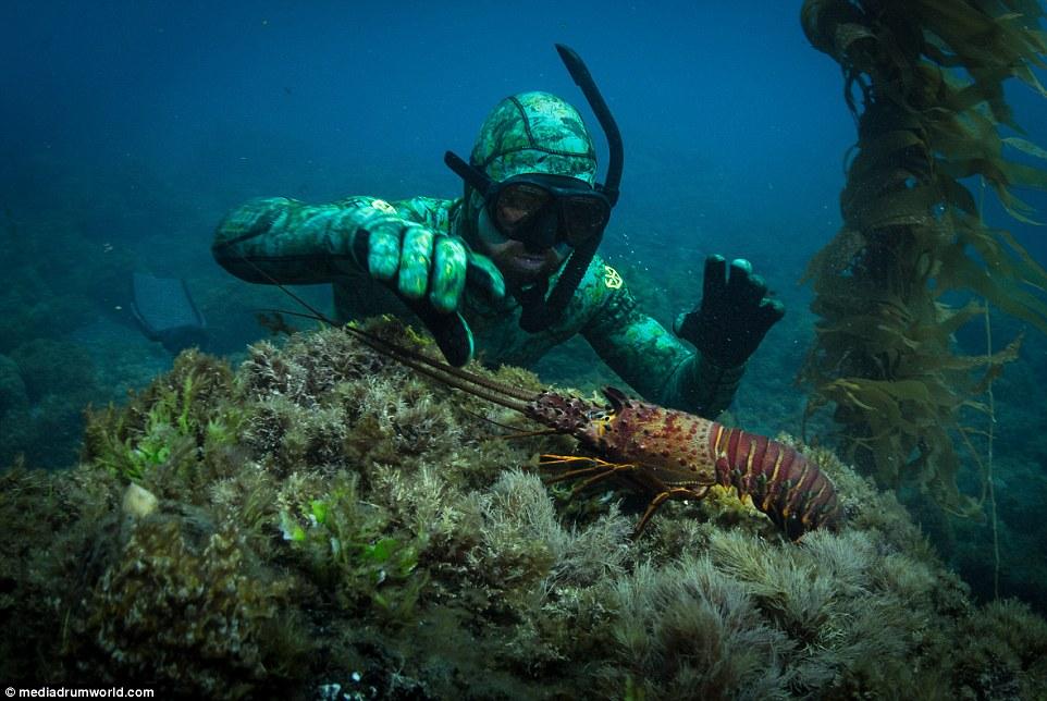 roupa-de-mergulho-invisivel-para-os-peixes-e-tubaroes_02