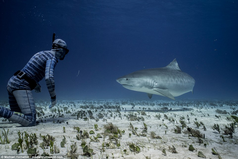 roupa-de-mergulho-invisivel-para-os-peixes-e-tubaroes_03
