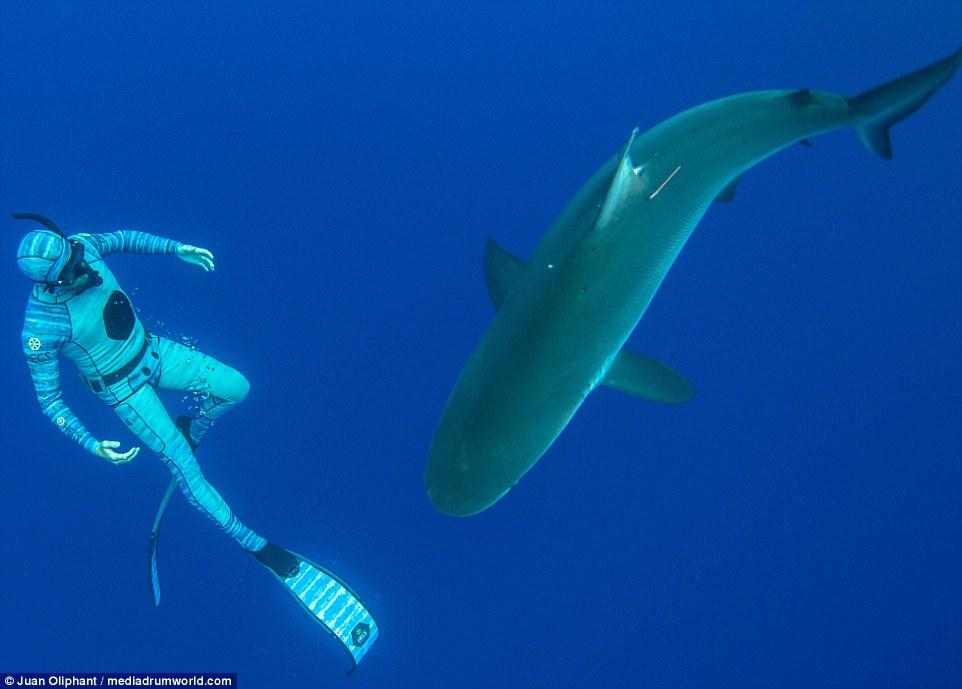 roupa-de-mergulho-invisivel-para-os-peixes-e-tubaroes_04
