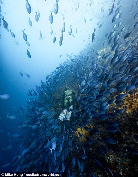 roupa-de-mergulho-invisivel-para-os-peixes-e-tubaroes_05