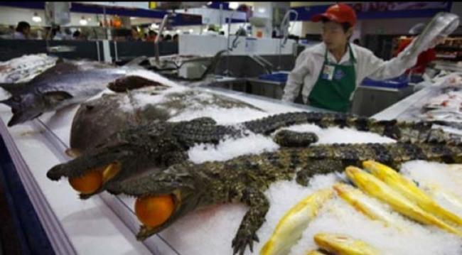 20-fotos-de-mercados-chineses-que-vão-te-causar-arrepios_1