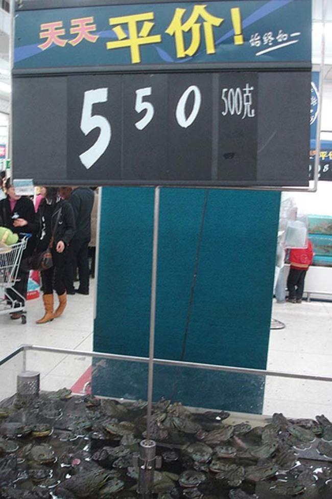 20-fotos-de-mercados-chineses-que-vão-te-causar-arrepios_3