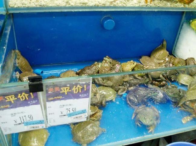20-fotos-de-mercados-chineses-que-vão-te-causar-arrepios_5