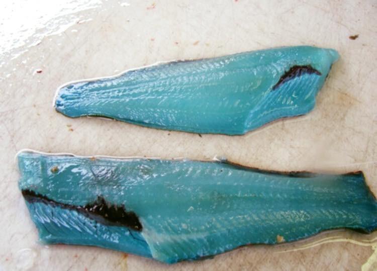 peixe-de-carne-azul_4