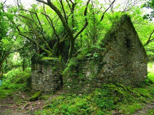 lugares-abandonados-dominados-pela-natureza_11