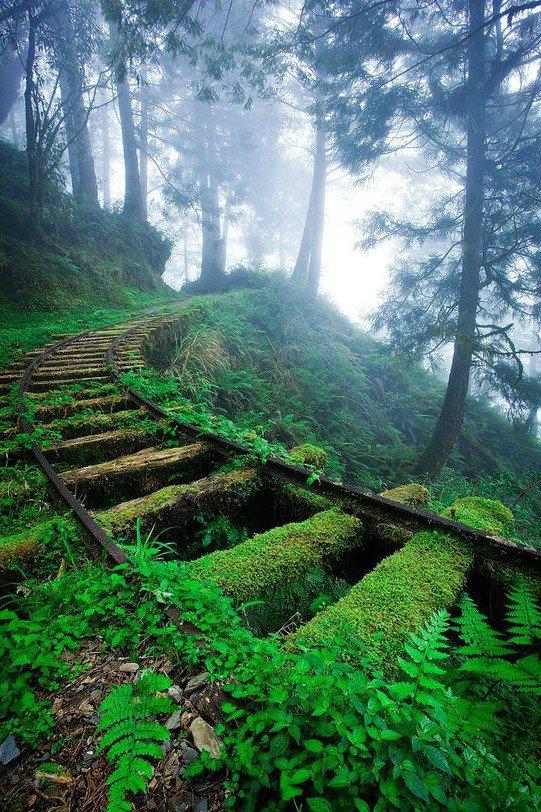 lugares-abandonados-dominados-pela-natureza_16