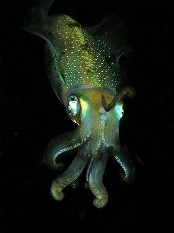 maiores-misterios-do-fundo-do-mar-7