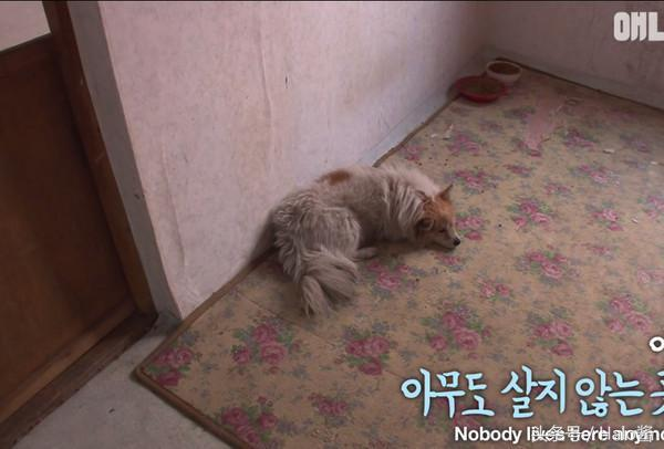 cachorro-espera-dona-que-nao-vai-voltar_1