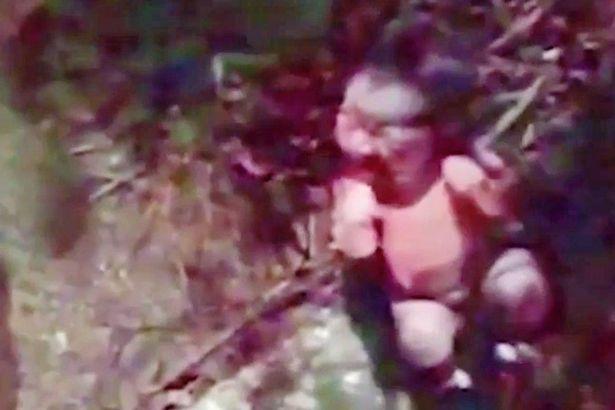 formigas-se-alimentam-de-bebe