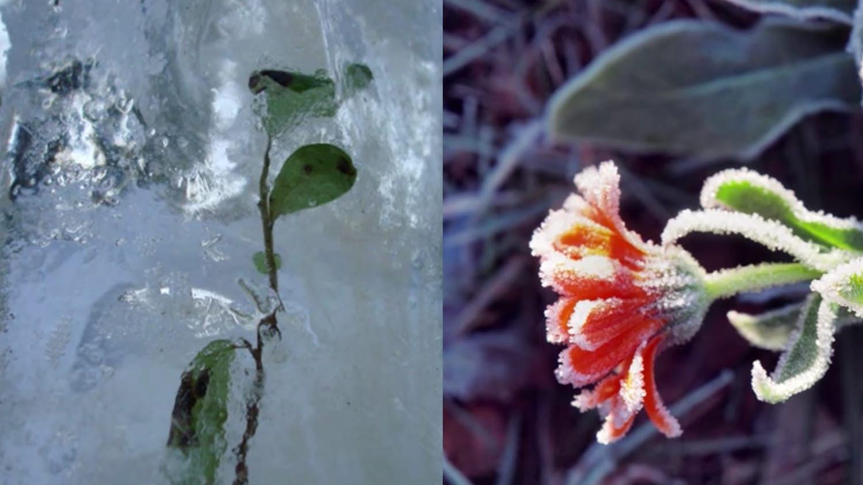 coisas-encontradas-no-gelo_15